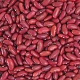 Fagioli nani rossi Fotografia Stock Libera da Diritti