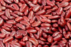 Fagioli nani rossi Fotografia Stock