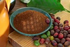Fagioli organici maturi e secchi rossi del caffè Arabica, caffè macinato fresco, bio- azienda agricola del caffè fotografia stock