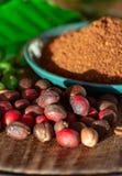 Fagioli organici maturi e secchi rossi del caffè Arabica, caffè macinato fresco, bio- azienda agricola del caffè immagine stock