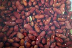 Fagioli rossi inzuppati in acqua immagine stock