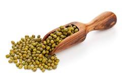 Fagioli verdi crudi in mestolo Fotografia Stock