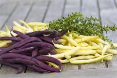 Fagioli viola e gialli con le erbe Fotografia Stock Libera da Diritti