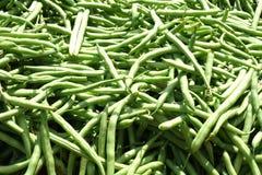 fagiolini verdi Immagini Stock