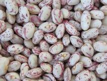 Fagiolo arrotondato con il fondo rosso di struttura delle macchiette I fagioli sono coltivati con l'agricoltura biologica in Tosc Fotografia Stock