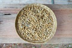 Fagiolo del caffè macchiato Fotografia Stock