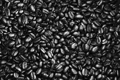 Fagiolo di Coffe in nero & nel bianco Fotografia Stock Libera da Diritti