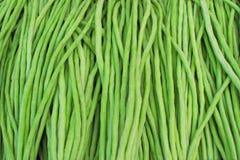 Fagiolo di lunghezza dell'iarda, verdure sane crudo materiale per cucinare te Fotografia Stock Libera da Diritti