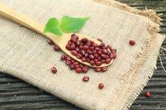 Fagiolo rosso sul cucchiaio di legno di bambù Immagine Stock Libera da Diritti