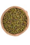 Fagiolo verde isolato Fotografia Stock Libera da Diritti