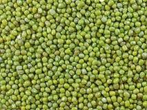 Fagiolo verde (vigna radiata) Immagini Stock