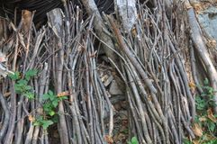 Bundle of branches. Bound together and used as fuel royalty free stock image