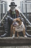 Fahionable man holding English bulldogs Royalty Free Stock Image