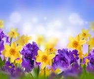 Fahne der Blumen-Background Stockfotografie