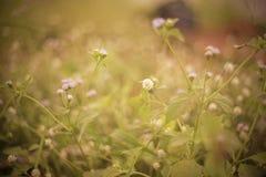 Fahne der Blumen-Background Lizenzfreie Stockfotos