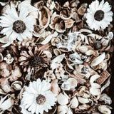 Fahne der Blumen-Background Lizenzfreies Stockfoto