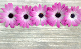Fahne der Blumen-Background Blumen auf einem hölzernen Brett Stockbilder