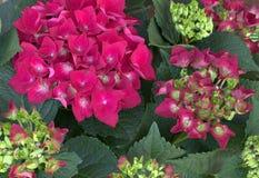 Fahne der Blumen-Background Rote Blumen Lizenzfreies Stockbild