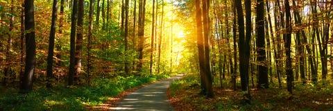 Fahnen3:1 Herbstwald mit dem Fu?weg, der in die Szene f?hrt Sonnenlichtstrahlen durch die Herbstbaumaste Kopieren Sie Platz stockbilder