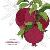 Fahnen mit Granatapfelfrüchten auf weißem Hintergrund lizenzfreie abbildung