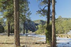 Fahnenmast-Arizona-Wald und -schnee lizenzfreie stockfotos