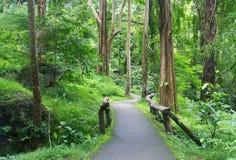 Fahrbahneingang zum Wald Stockbild