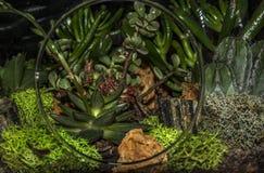 Fahrbarer Topf im Terrarium lizenzfreie stockfotografie