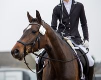 Fahren auf ein Pferd Lizenzfreies Stockbild