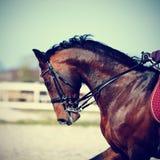 Fahren auf ein Pferd Lizenzfreie Stockfotos