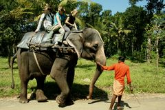 Fahren auf einen Elefanten Stockbild