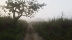 Fahren auf Jeep bei Safari Tour in Nationalpark Chitwan am frühen Morgen mit dichtem Nebel und Dunst stock video