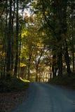 Fahren durch ein forrest im Herbst Lizenzfreies Stockbild