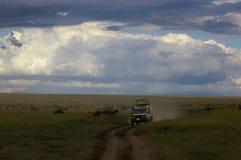 Fahren durch eine Gruppe von Gnus und von Zebra in Tansania stockfotos