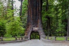 Fahren Sie durch Baum Chandalier-Baum stockbild