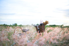 Fahren Sie mit Korb und Gitarre von Blumen in der Wiese rad Stockfoto