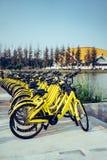 Fahrräder, die im Campus parken stockfotografie
