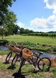 Fahrräder in einem Weinberg Stockbild
