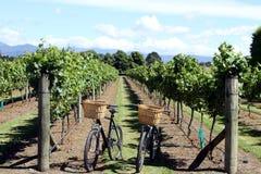 Fahrräder im Weinberg Stockfoto