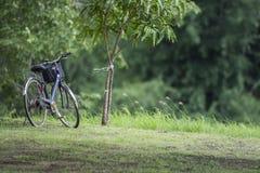 Fahrrad auf dem Rasen im Park Lizenzfreie Stockfotografie