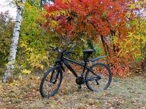 Fahrrad auf Hintergrund von Herbstbäumen Lizenzfreie Stockfotos