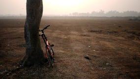 Fahrrad, das auf Baum sich lehnt Lizenzfreies Stockbild