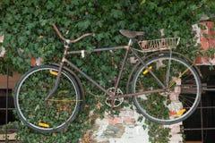 Fahrrad, das an den Wand whith Anlagen hängt Stockfoto