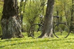 Fahrrad in einem Frühlingspark auf einem grünen Gras unter Baum stockbild