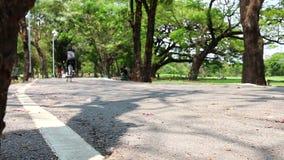 Fahrrad-Fahrschneller Durchlauf im Park stock video