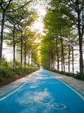 Fahrrad Greenway mit grünen Bäumen Lizenzfreie Stockfotos