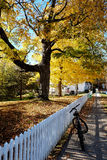 Fahrrad im Herbst Stockbilder