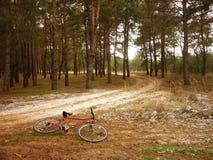 Fahrrad im Holz Lizenzfreies Stockbild
