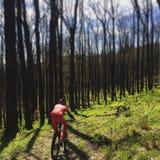Fahrrad im Holz Stockbilder