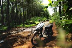 Fahrrad im Wald stockfotografie