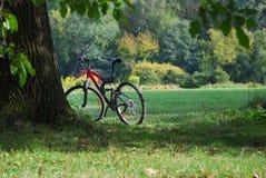 Fahrrad im Wald Lizenzfreie Stockfotografie